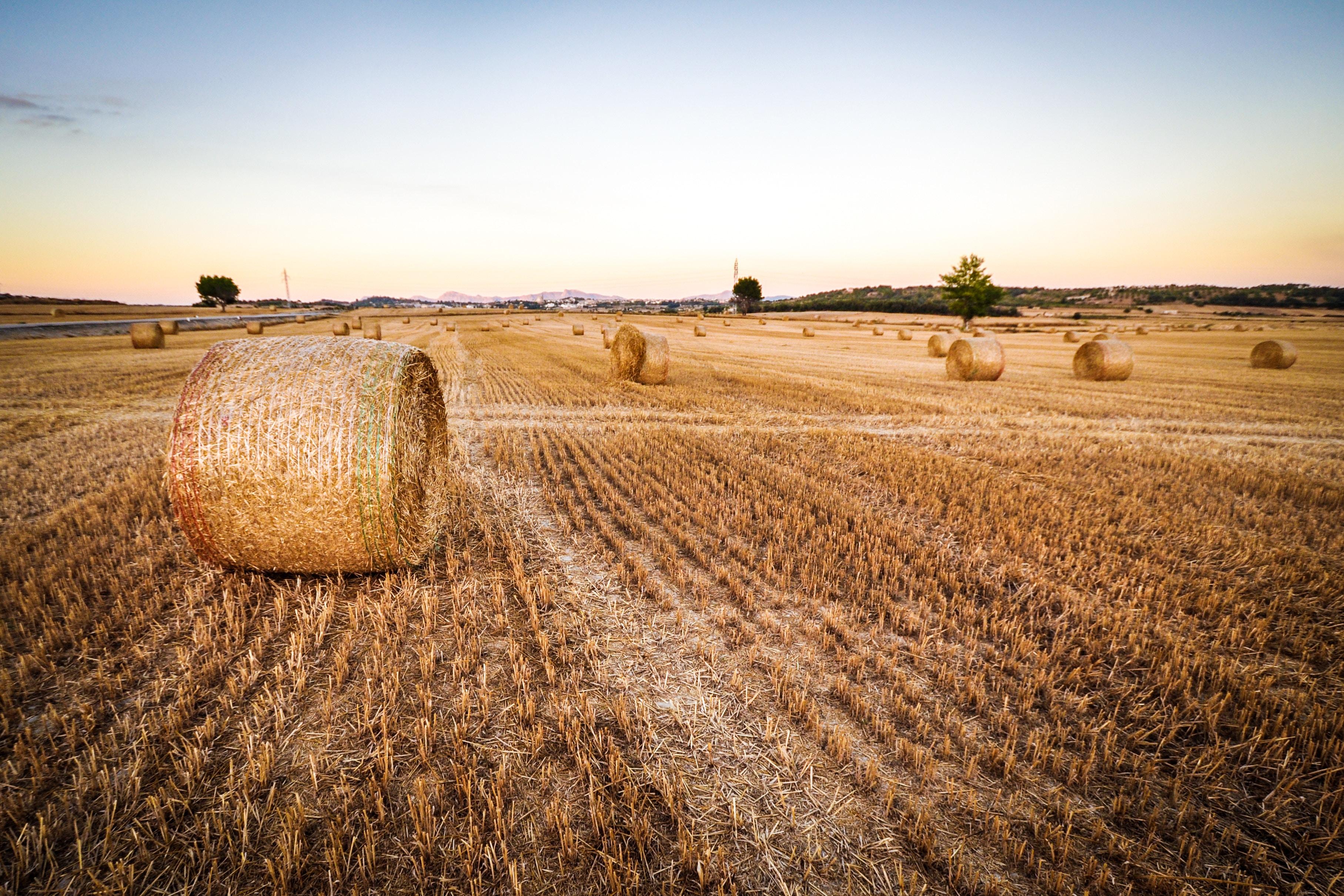 Fillon, candidat de l'agro-business