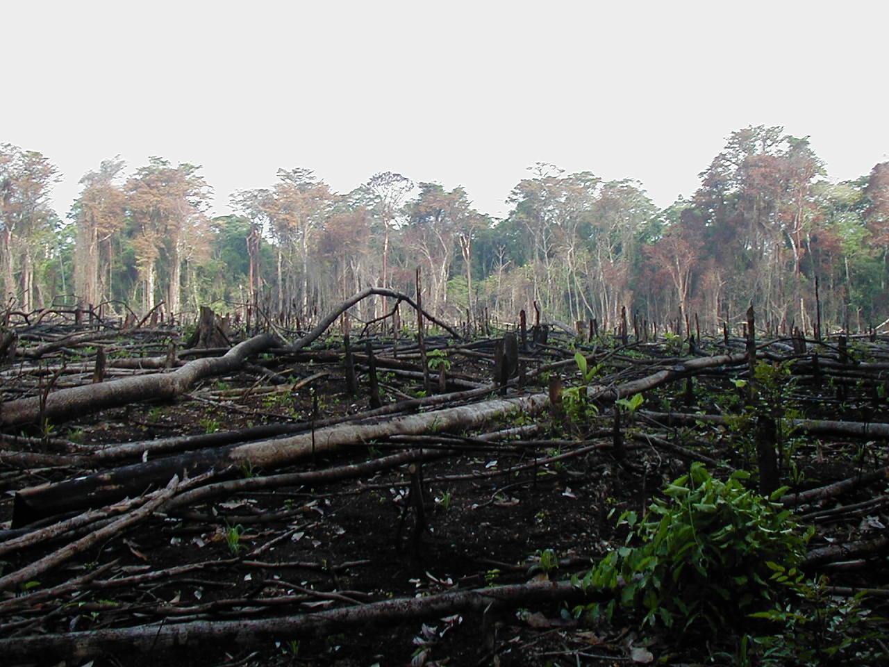 Brésil : Temer fait exploser la déforestation en Amazonie
