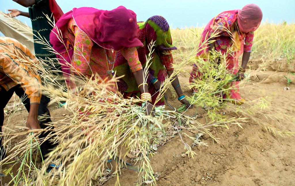 Agriculture et mondialisation : déconstruire le mythe libre-échangiste