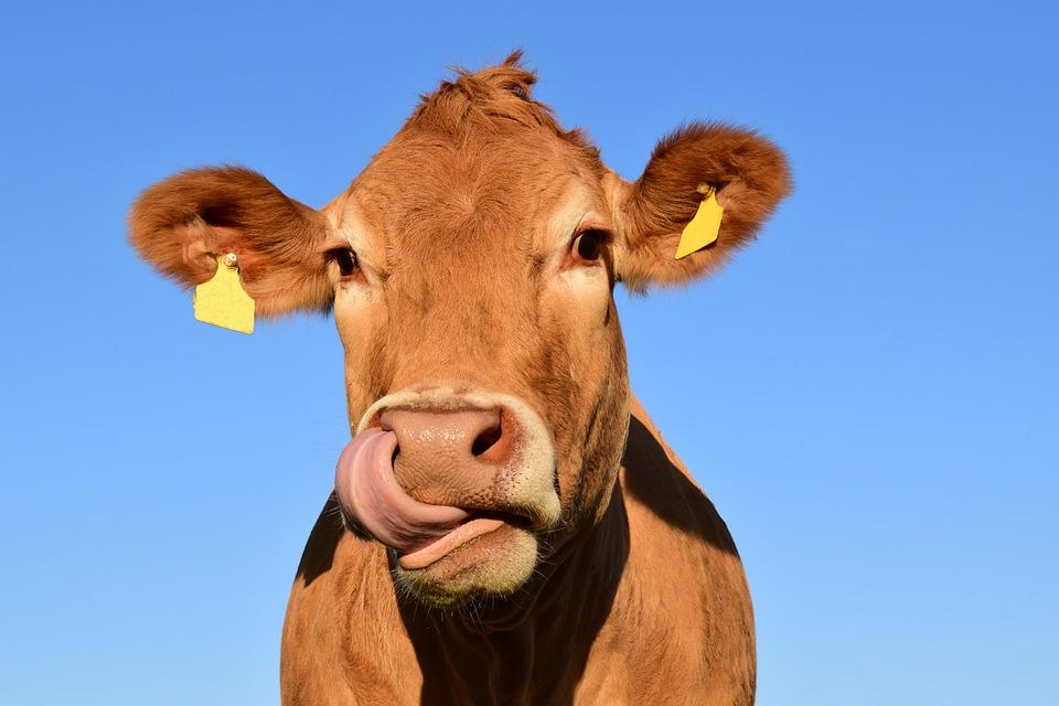 Les Etats Généraux de l'Alimentation : vite fait, mal fait ?