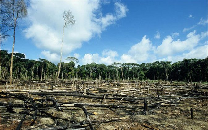 https://afriquenvironnementplus.info/nourrir-monde-deforestation-possible/