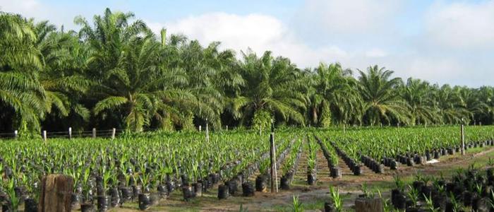 https://wrm.org.uy/es/articulos-del-boletin-wrm/expansion-de-las-plantaciones-de-palma-aceitera-como-politica-de-estado-en-centroamerica/
